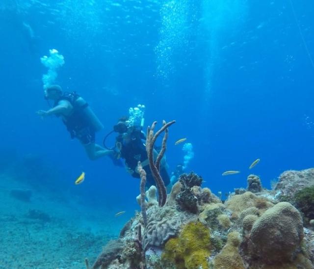 Cozumel - Paraiso reef