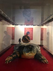 La tortue du lac Hoan Kiem - Hanoi